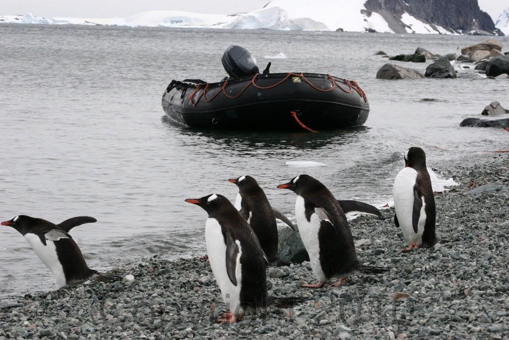 Antarctica.2010.IMG_2630