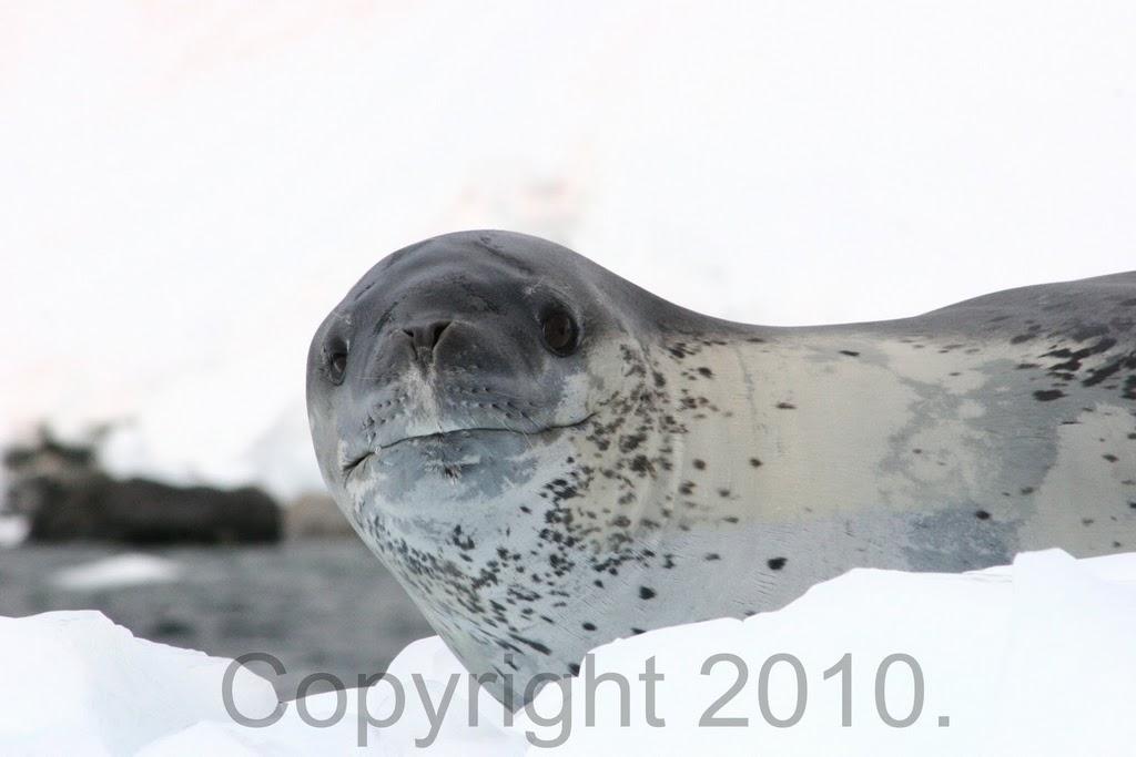 Antarctica.2010.IMG_2705