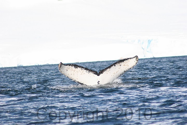 Antarctica.2010.IMG_2885