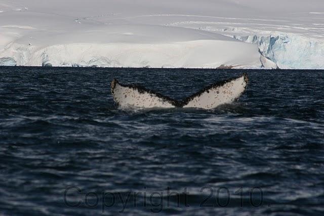 Antarctica.2010.IMG_2886