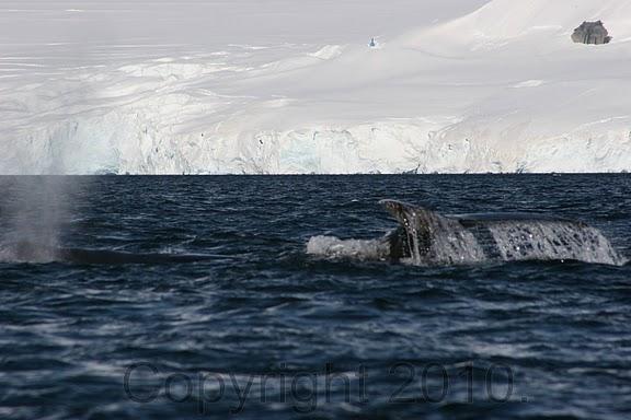 Antarctica.2010.IMG_2889