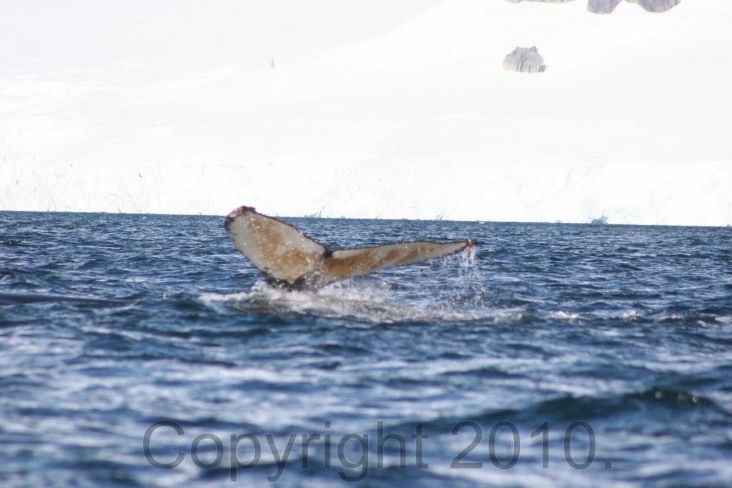 Antarctica.2010.IMG_2890