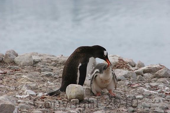 Antarctica.2010.IMG_3110