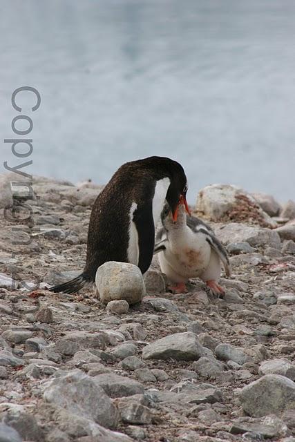 Antarctica.2010.IMG_3111
