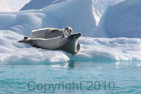 Antarctica.2010.IMG_3208