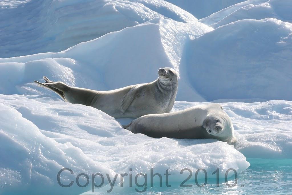 Antarctica.2010.IMG_3210