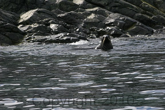 Antarctica.2010.IMG_3531