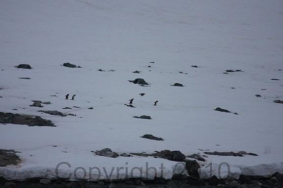 Antarctica.2010.IMG_7341