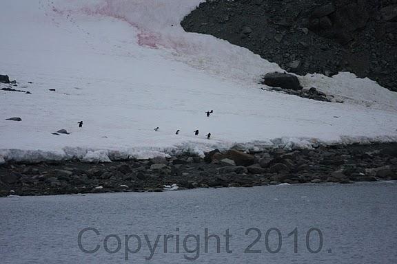 Antarctica.2010.IMG_7343