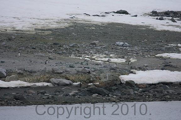 Antarctica.2010.IMG_7344