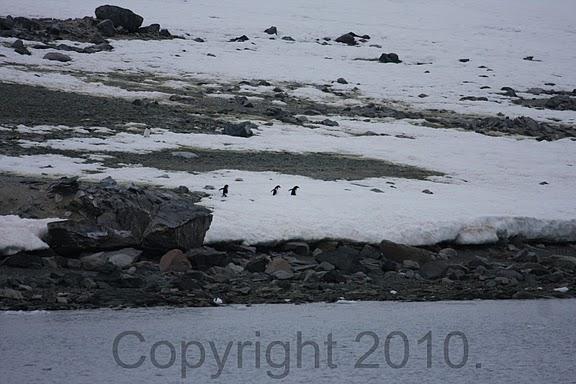 Antarctica.2010.IMG_7345