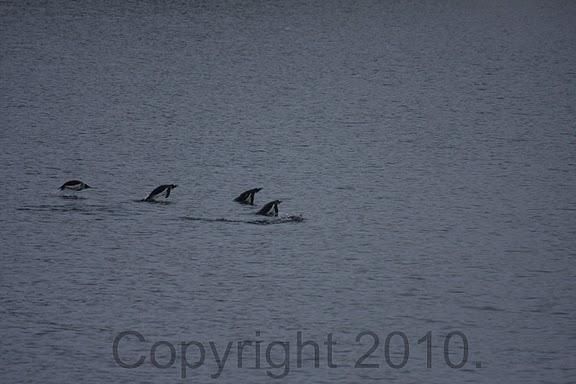 Antarctica.2010.IMG_7347