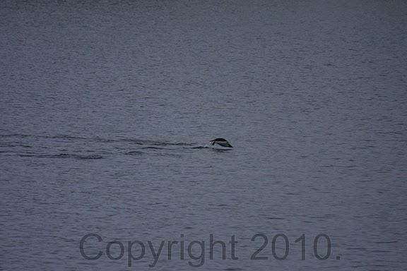 Antarctica.2010.IMG_7351