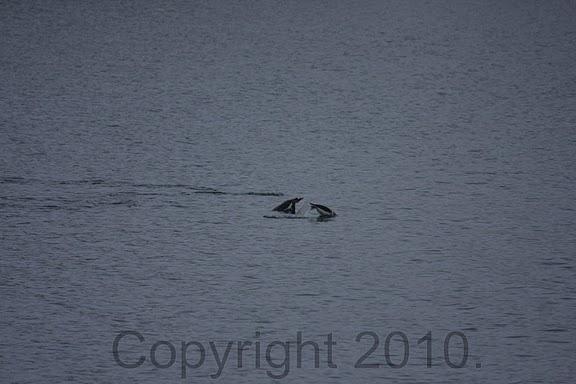 Antarctica.2010.IMG_7353