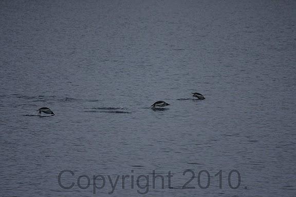 Antarctica.2010.IMG_7354