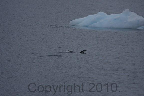 Antarctica.2010.IMG_7363