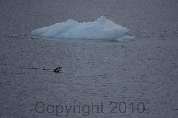 Antarctica.2010.IMG_7364