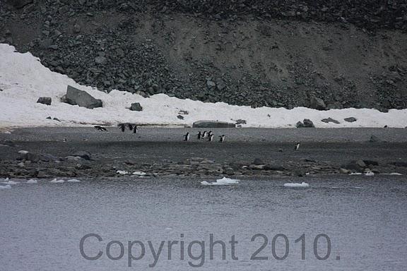 Antarctica.2010.IMG_7368