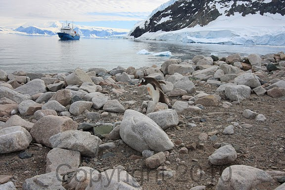 Antarctica.2010.IMG_7450
