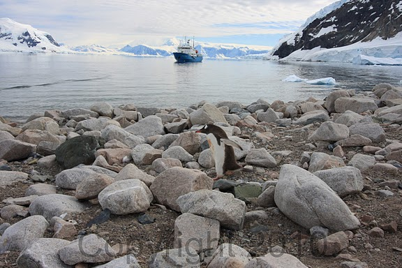 Antarctica.2010.IMG_7451