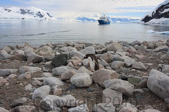 Antarctica.2010.IMG_7452