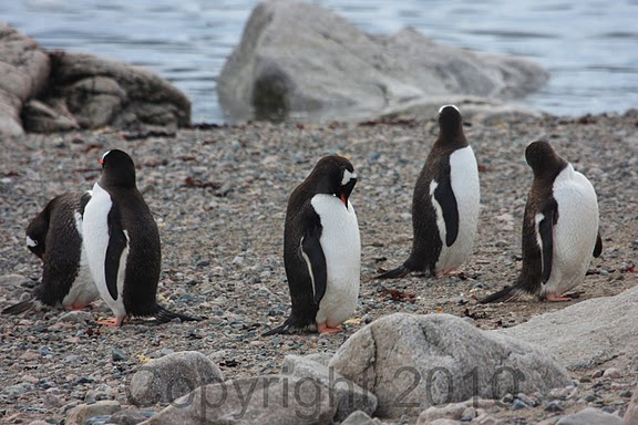 Antarctica.2010.IMG_7468