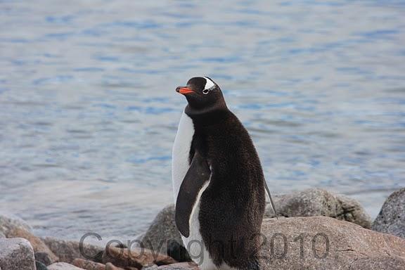 Antarctica.2010.IMG_7471