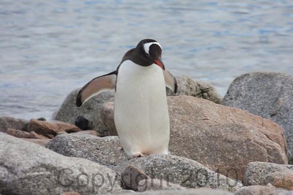 Antarctica.2010.IMG_7474