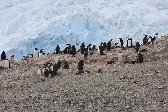 Antarctica.2010.IMG_7478