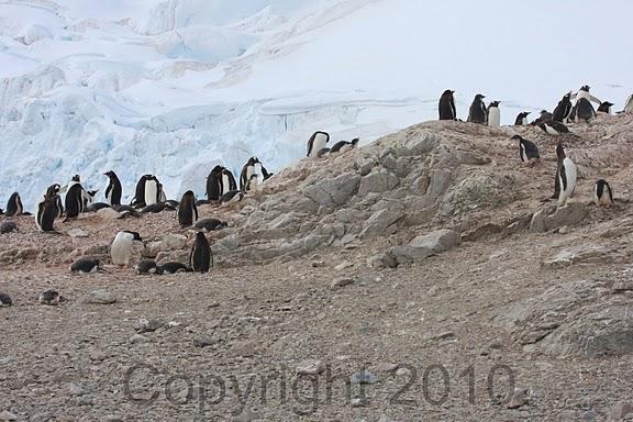 Antarctica.2010.IMG_7480