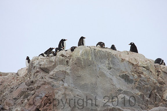 Antarctica.2010.IMG_7481