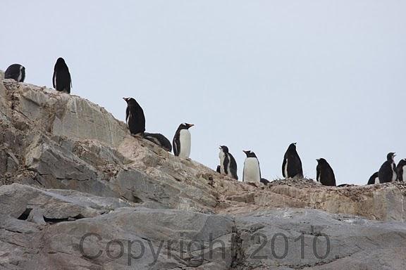 Antarctica.2010.IMG_7482
