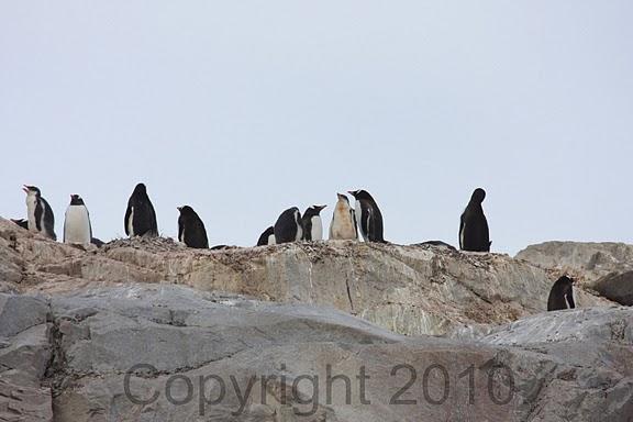 Antarctica.2010.IMG_7483