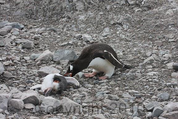 Antarctica.2010.IMG_7484