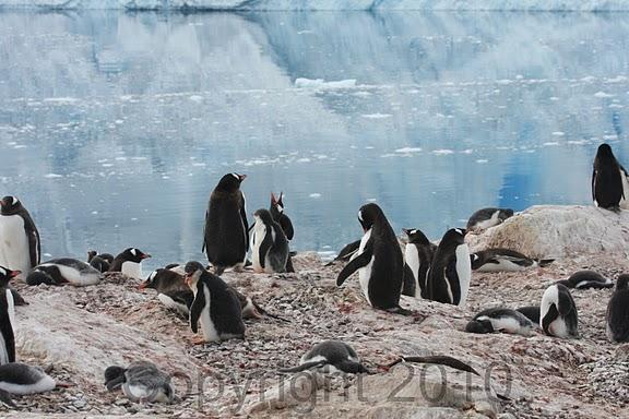 Antarctica.2010.IMG_7488