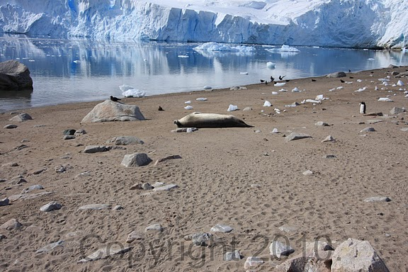 Antarctica.2010.IMG_7507