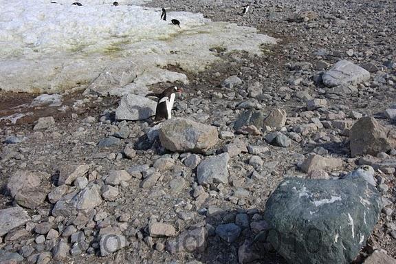 Antarctica.2010.IMG_7508