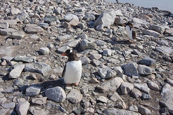 Antarctica.2010.IMG_7517