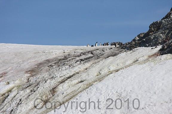 Antarctica.2010.IMG_7632