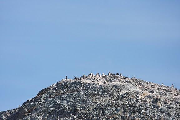 Antarctica.2010.IMG_7636