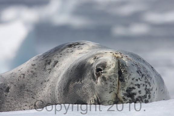 Antarctica.2010.IMG_7652