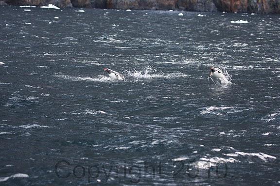 Antarctica.2010.IMG_7708
