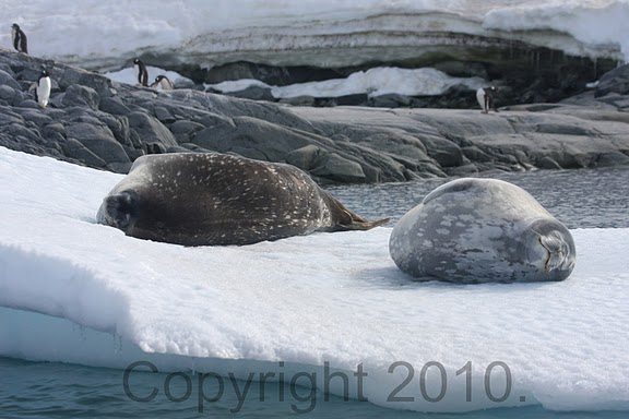 Antarctica.2010.IMG_7922