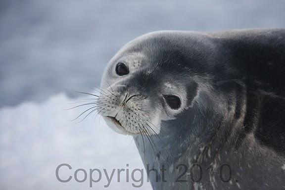 Antarctica.2010.IMG_7957