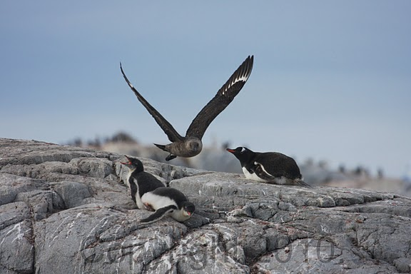 Antarctica.2010.IMG_8044